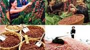 Kim ngạch xuất khẩu sang Algeria tăng 29% trong 7 tháng đầu năm