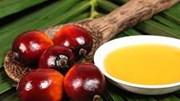 Malaysia xúc tiến các sản phẩm dầu cọ tại Việt Nam