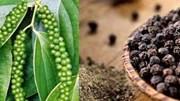 Xuất khẩu hạt tiêu 6 tháng đầu năm lượng tăng, nhưng giảm nhẹ kim ngạch