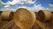 Rơm khô nguồn cung khan hiếm, giá đẩy lên cao