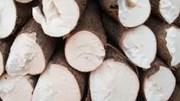 Xuất khẩu sắn và sản phẩm tăng về lượng nhưng kim ngạch suy giảm