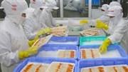 TT thủy sản: Tôm hùm thương phẩm giá tăng, đa dạng hàng thủy sản sang Trung Quốc