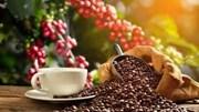 Người trồng cà phê Colombia hưởng lợi nhờ đồng peso giảm giá