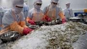Xuất khẩu tôm tăng trưởng tốt trong 6 tháng đầu năm bất chấp dịch Covid-19