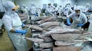 Xuất khẩu cá ngừ Việt Nam sau nửa tháng thực thi EVFTA