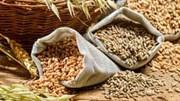 Điểm lại thị trường ngũ cốc tuần qua