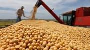 Trung Quốc: Nhập khẩu đậu tương tháng 1-2/2021 giảm nhẹ do sự chậm trễ của nguồn hàng