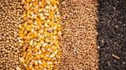 Nhập khẩu ngũ cốc của Trung Quốc bùng nổ trong năm nay