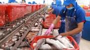 Xuất khẩu cá tra sang EU giảm hơn 26% so với cùng kỳ