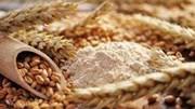 Giá ngũ cốc ngày 30/7, Lúa mì thiết lập mức tăng mới