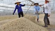 Hiệp định Thương mại tự do ASEAN- Ấn Độ (AIFTA): Thúc đẩy xuất khẩu hàng hóa Việt Nam