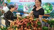 Đưa vải, nhãn, thanh long Việt Nam vào hệ thống phân phối lớn tại Singapore