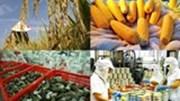 Xuất khẩu nông, lâm và thủy sản đạt 17,8 tỷ USD
