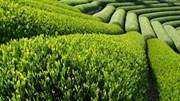 Từ 1/10/2016, không giải quyết hồ sơ giấy 9 thủ tục về nông nghiệp