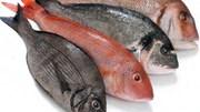 Đề nghị xây dựng bản đồ vùng biển cấm khai thác cá tầng đáy tại 4 tỉnh miền Trung