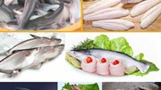 Năm 2016 giá cá tra nguyên liệu biến động và giảm sâu