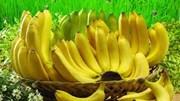 Cơ hội xuất khẩu chuối Việt đang rộng mở
