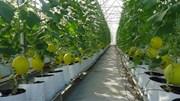 Đã có tiêu chí xác định dự án nông nghiệp ứng dụng công nghệ cao