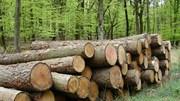 Giá gỗ nhập khẩu tuần 24-30/11/2017