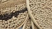 Giá nguyên liệu sản xuất thức ăn chăn nuôi nhập khẩu tuần 24-30/11/2017
