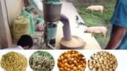 Giá nguyên liệu sản xuất thức ăn chăn nuôi nhập khẩu tuần 1-7/12/2017