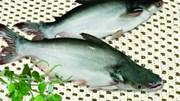 USDA công nhận hệ thống pháp luật quản lý cá da trơn của VN tương đương Mỹ