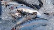 Xuất khẩu thủy sản tăng mạnh nhất ở thị trường Campuchia