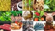 Tin đáng chú ý 18/5/2019: Giá gạo, cà phê, hạt tiêu giảm; nguy cơ giải cứu Mít Thái