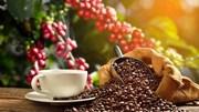 Xuất khẩu cà phê 4 tháng đầu năm giảm cả lượng và kim ngạch
