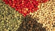 Kim ngạch xuất khẩu hạt tiêu 5 tháng sang hầu hết các thị trường sụt giảm