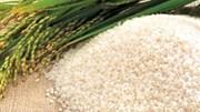 Giá gạo xuất khẩu Việt Nam tăng lên mức cao nhất trong gần 16 tháng qua