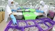 Xuất khẩu thủy sản 6 tháng đầu năm 2020 thu về trên 3,6 tỷ USD