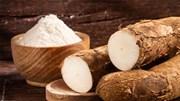 Xuất khẩu sắn lát 2 tháng đầu năm 2021 tăng cao