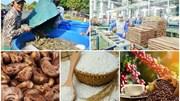 Kim ngạch xuất nhập khẩu nông, lâm, thủy sản 7 tháng đạt trên 53,2 tỷ USD