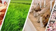 Các thị trường chủ yếu cung cấp thức ăn gia súc cho Việt Nam 9 tháng năm 2021