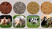 Xuất khẩu thức ăn gia súc 9 tháng năm 2021 tăng 36%