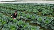 Hà Nội: Chung tay xây dựng thương hiệu nông sản