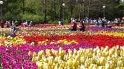 Chờ đón Festival hoa Đà Lạt năm 2017