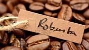Giá cà phê trong nước duy trì dưới 36 triệu đồng/tấn