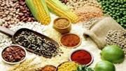 Sản lượng ngũ cốc Trung Quốc năm 2016 giảm do diện tích ngô giảm