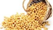 Thị trường TĂCN thế giới ngày 26/5/2020: Đồng USD suy yếu nâng đỡ giá đậu tương