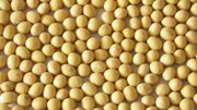 Thị trường TĂCN thế giới ngày 2/6/2020: Giá đậu tương giảm