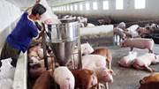 Ngành chăn nuôi kém cạnh tranh, thiếu bền vững khi tham gia TPP