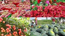 Lạng Sơn: Hơn 400.000 tấn hoa quả, nông sản Việt xuất qua Trung Quốc