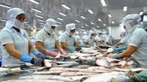 Thông báo quy định xuất khẩu cá bộ Siluriformes vào Hoa Kỳ