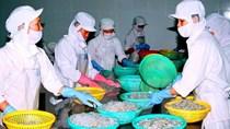 Việt Nam-EU: Sẵn sàng cho cơ hội mới