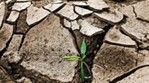 Kinh tế xanh - xu thế tất yếu của phát triển bền vững