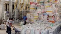 Lập trình hệ điều hành mới cho xuất khẩu gạo