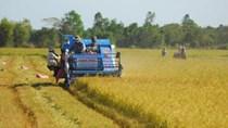 Xuất khẩu gạo nhiều tín hiệu tốt nhưng vẫn tiềm ẩn khó khăn