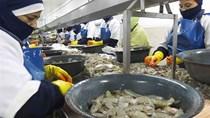 Ngành tôm Ecuador - Nước xuất khẩu tôm thứ ba thế giới, bùng nổ